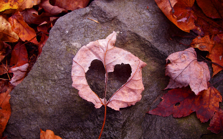 Autumn Heart - leaves, photography, leaf, nature, heart, rock, autumn