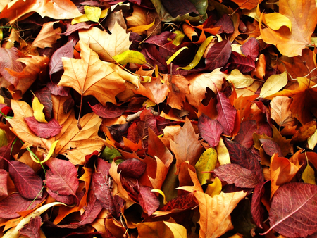 autumn-carpet - beautiful, colorful, season, leaf, view, carpet, fall, autumn, leaves, forest, nature