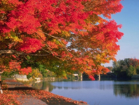 Fall Time - lake, nature, peaceful, fall