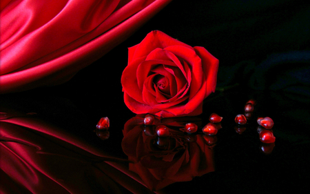 red rose  flowers  nature background wallpapers on desktop nexus, Beautiful flower