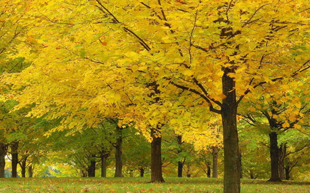 Trees - autumn, beautiful, alley, landscape, forest, yellow, nature, trees