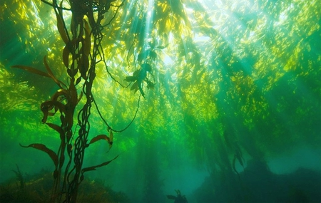 Underwater Plants - Other & Nature Background Wallpapers on ...