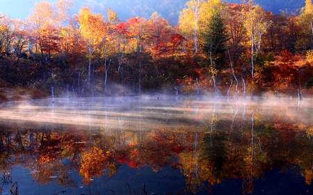 FOGGY AUTUMN - trees, river, fog, colors, autumn