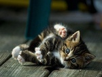 Playful cat