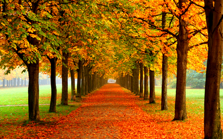 Autumn Colors - splendor, beautiful, way, pretty, path, tree, romantic, view, beauty, fall, autumn, walk, carpet of leaves, grass, alley, green, trees, colorful, colors, lovely, carpet, leaves, autumn colors, autumn leaves, nature, peaceful, romance