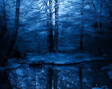 Ever Secluded in Blue - reflection, woodland, forests, blue, ice, night, water, snow, forest, secluded, trees, ever, pond, photography, nature, winter, reflections