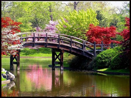 Spring Time Beauty - flowers, spring, trees, reflection, rocks, blossoms, water, plants, park, bridge, grass, bushes