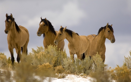 four horses - photography, horse, wild, nature, animal