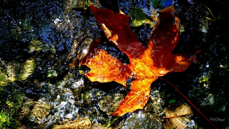 The Floating Leaf - rocks, leaf, pacific northwest, bright, fall, autumn, firefox persona, water, oak, sunshine, maple, sun