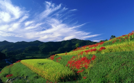 Blue-sky-white-clouds-and-flowers - green, flowers, clouds, sky, grass, red, nature