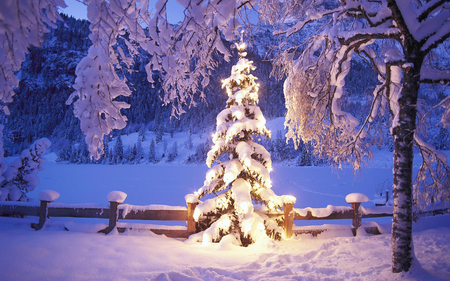 Snowy Christmas Tree - spotlight, snow, lights, mountains, foothills, forest, christmas tree, christmas