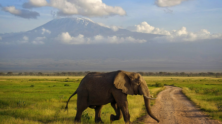 Elephant Crossing - landscape, road crossing, elephant, clouds, field, mountain, beauty