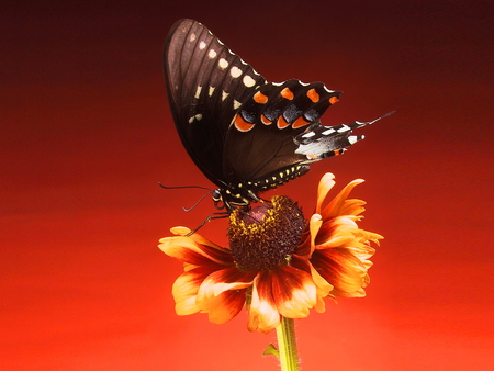 Butterfly on flower - butterfly, flower, beautiful, red, nature
