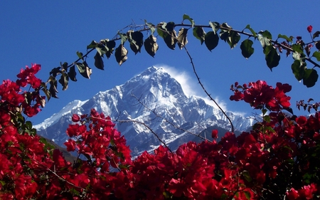 Himalaya in Nepal - peaceful, peace, light, white, tranquility, other, great, amazing, spiritual, mystic, himalaya, awesome, flowers, india, sky, cold, hot, zen, cool, nepal, photography, widescreen, romantic, mystical, tree, red, flower, himalayas, mountain, forces of nature, spirit, religious, blue, gorgeous, nice, mountains, trees, nature, beauty, beautiful, snow, dreamy, wind, picture, calming