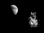 The tiger and the moon