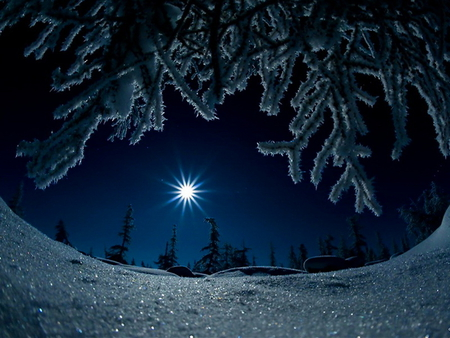 cold winter night winter amp nature background wallpapers