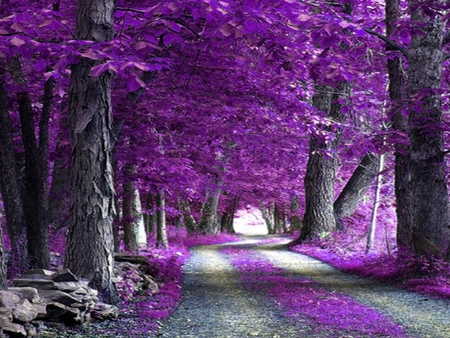 Purple-Forest - purple, trees, beautiful, forest, picture