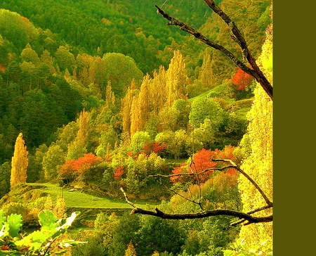 October hillside - green, trees, orange, colors, gold, hills, autumn, yellow