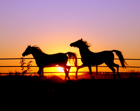 sunset horse - Sunsets & Nature Background Wallpapers on Desktop ...