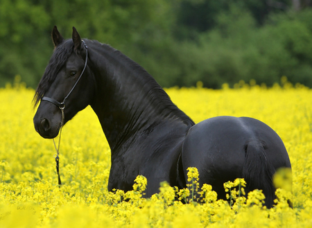 horses and flowers wallpaper - photo #10