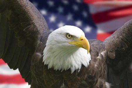 American Eagle - eagle, american flag, bird of prey, american, patriotic, bald eagle, flag