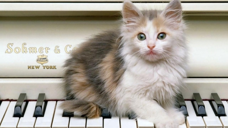 PLAYING PIANO - cute, piano, feline, kitten