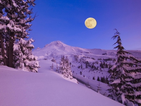 Full Moon at Dawn - full moon, morning, trees, dawn, snow, mountains, lovely