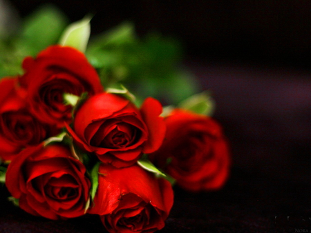 bouquet of red roses  other  abstract background wallpapers on, Beautiful flower