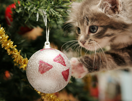 Merry Christmas - christmas, photography, great, tree, cute, sweet, amazing, feline, holiday, kitty, cat, colors, christmas tree, nice, merry christmas, little, ball, animal, cool, beauty, beautiful, lovely, pretty, kitten, pussy, photo