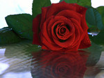 Red rose reflection for Barb ♥ღ(fireangls4)ღ♥
