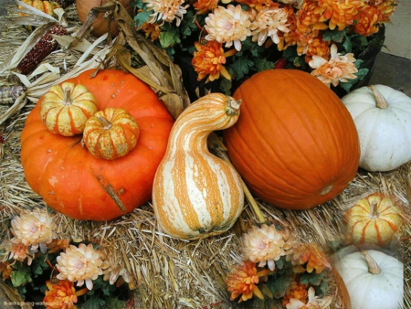 Thanksgiving - flowers, pumpkins, fall, still life
