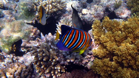COLORFUL FISH - sea, animals, fish, colorful