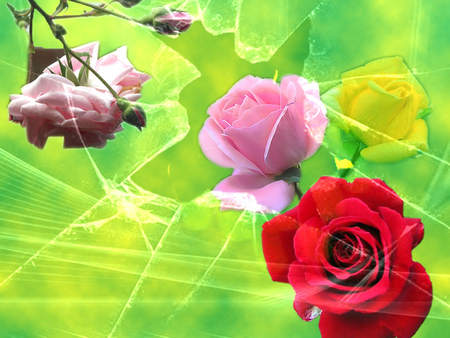 Bunga Mawar - green, rose, pink rose, roses, red rose, glass, yellow rose