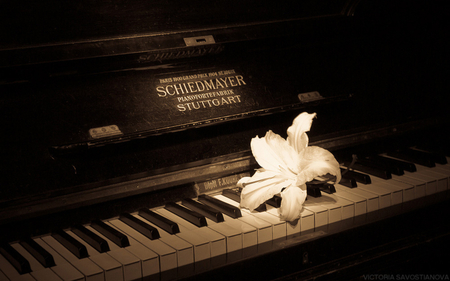 OLD PIANO - piano, flower, photography, bw, music, sepia, beauty