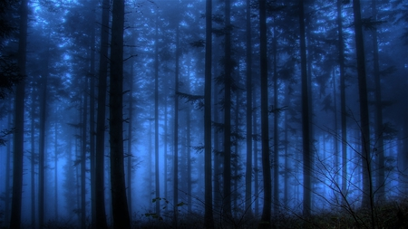 spooky blue   forests amp nature background wallpapers on