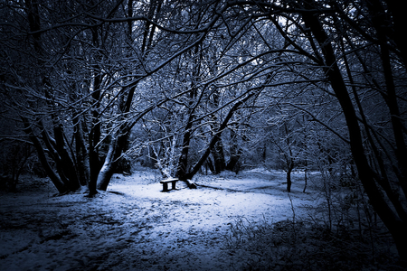 Winter night - Winter & Nature Background Wallpapers on ...