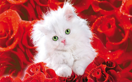pretty kitty and red roses for my friend carmenmbonilla  cats, Beautiful flower