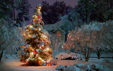 Christmas Tree at Night - christmas lights, beautiful, lights, tree, beauty, christmas, night, snowflakes, snow, house, nature, winter, christmas tree