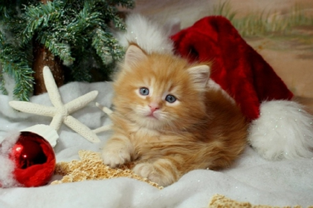 christmas kitten cats amp animals background wallpapers on