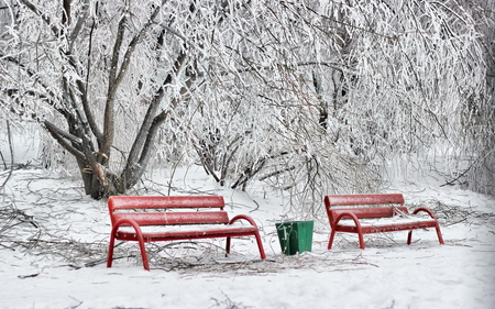 Winter - splendor, beautiful, pretty, tree, view, beauty, snow, red, bench, snowy, winter time, trees, lovely, benches, nature, peaceful, winter