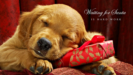 merry christmas eve images dog pmugsn newyeargroup2020 info newyeargroup2020 info