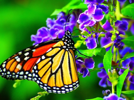 bright butterfly and purple flowers  butterflies  animals, Beautiful flower