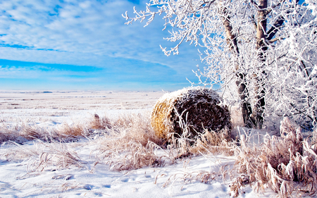 Winter Time - field, winter, clouds, peaceful, nature, trees, view, frozen, lovely, winter time, grass, snow, beauty, blue sky, tree, beautiful, cold, splendor, sky