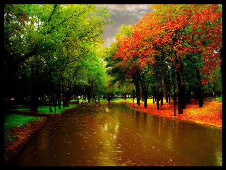 Lovely Autumn Rain Is Just Beautiful