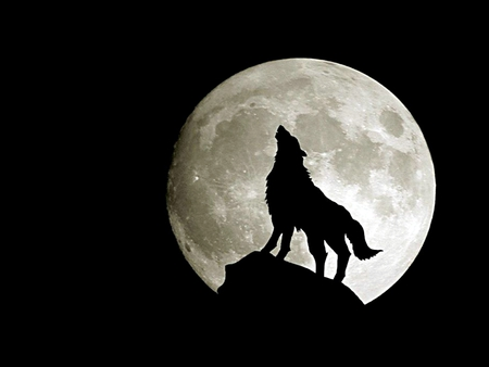 Wolf - Full Moon - alone, mysterious, silhouette, abstract, fast, night, full, fairy, awesome, new moon, picture, lobo, loup, light, wildlife, drawing, shape, twilight, romantic, dogs, white, moonlight, howls, rock, dark art, movie, black, eclipse, widescreen, image, nature, fantastic, amazing, darkness, bats, howl, dark, nice, gothic, incredible, forest, fantasy, howling, gorgeous, other, collage, cute, black and white, super, full moon, dog, wallpaper, wolves, 3d, winter, wolf, dreamy, collages, cool, animals, beautiful, mmm, great, animal, wild, wow, space, myst, fun, creature, stunning, moon, hot