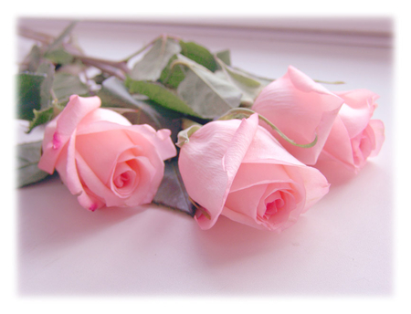 Pink Roses For You Lovely Beautiful