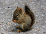 squirrel-10126-2560x1600.jpg