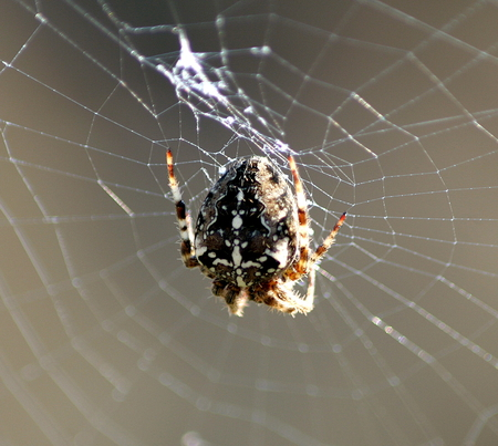 Constructing a Web - bugs, insect, web, spider