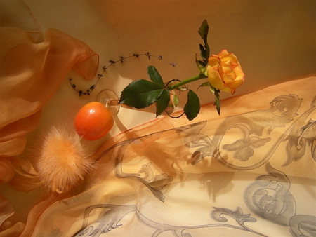 Still life - rose, orange, beautiful, pretty, lovely, lonely, nice, still life, res, feather