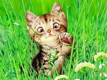 FROG AT PLAY - grass, wallpaper, play, kitty